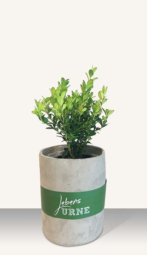 Pflanzen Sie einen Buchsbaum zur Erinnerung an Ihr geliebtes Tier - Lebensurne von URNITAS.com